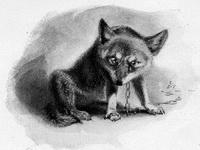 Животные-герои, к 150-летию со дня рождения Э. Сетон-Томпсона