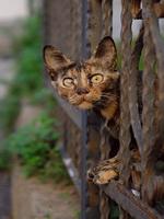 Кошка, которая…