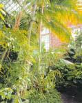 Пальмовая оранжерея