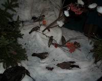 Зимушка-зима во Владимире