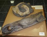 Магия природы в творчестве в Дарвиновском музее