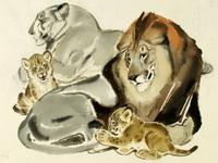 В.А. Белышев. Львы. Иллюстрация к книге И. Акимушкина Это все кошки. 1967-69