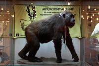 Марафон  долголетия в Дарвиновском музее