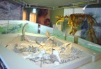 Следы Земной памяти. 2009. Азовский музей