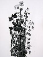 Гунила Видхольм Карлсон, Nature Morte