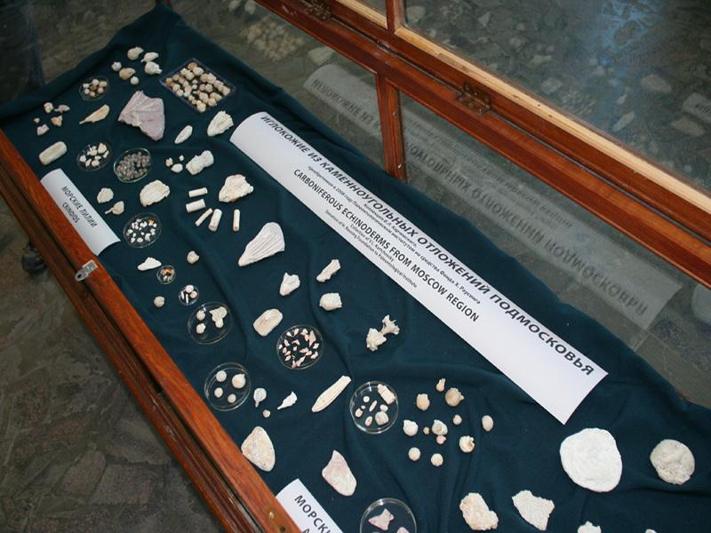 Экспозиции: Коллекция иглокожих из Подмосковных каменноугольных отложений.