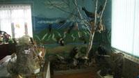 Флора и фауна Камчатки