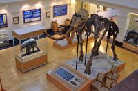 Выставка Время мамонта