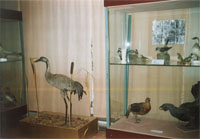 Фрагмент выставки  Уголки  природы чудной