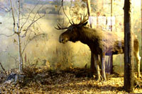 Природа Удмуртии. Фото Е. Караванова