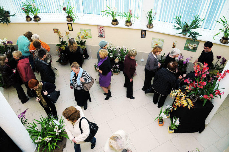 Значимые места: Выставка Знакомьтесь: Орхидеи, октябрь 2011 г.