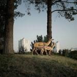 Город мечты - Анук Стекете, Эфье Бланкеворт