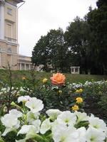 Значимые места: розы в цветниках Михайловского сада