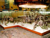Значимые места: Галерея парейазавров