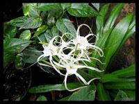 Растения в Главном ботаническом саду