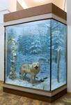 Фрагмент экспозиции Природа Тверского края. Диорама Волк
