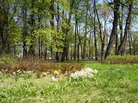 Михайловский сад весной