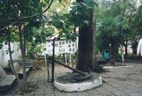 Уголок дворика музея