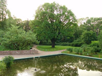 Вид дендрария. Ботанический сад МГУ Аптекарский огород