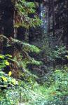 Леса Татарстана в окрестностях Арска