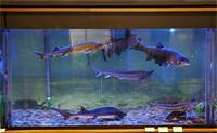 Аквариумы в экспозиции Музей Амура