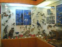Вид экспозиции. Птицы