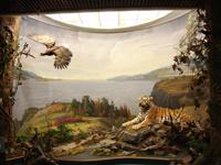Диорама Амурские дали в экспозиции Музей Амура